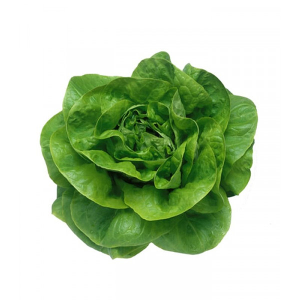 Lettuce Green, IRISH, 1pc Vegetables