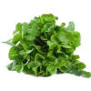 Lettuce, IRISH, 1pc
