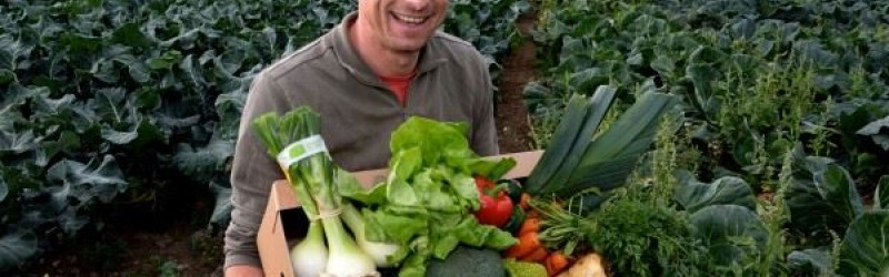 Enter our Competition to Win Free Veg for a Year
