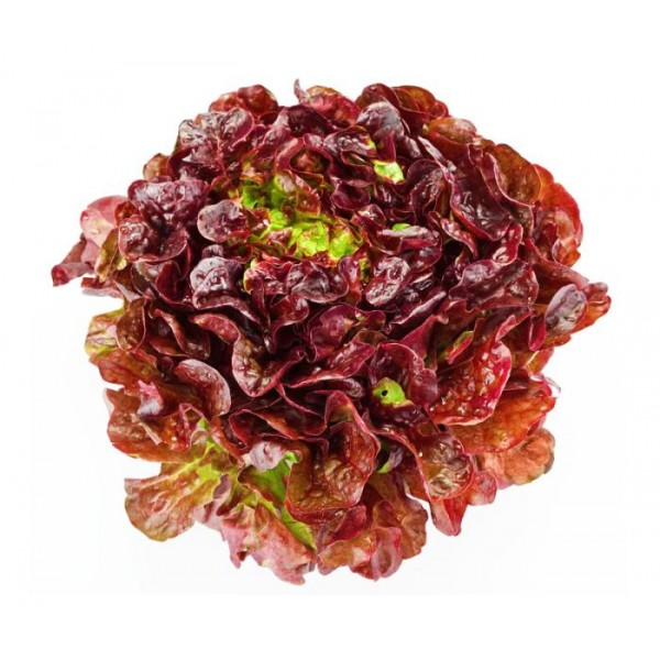 Organic Lettuce Red